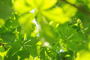 green_leaves_sunlight.jpg