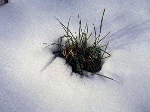 grass_through_snow.jpg