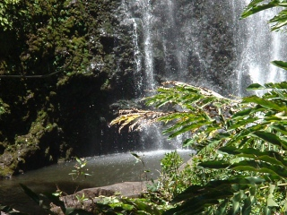 Jungle waterfall on Maui