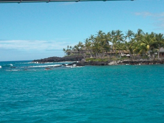 Gorgeous blue water and palm trees in a cove on the Kona coast