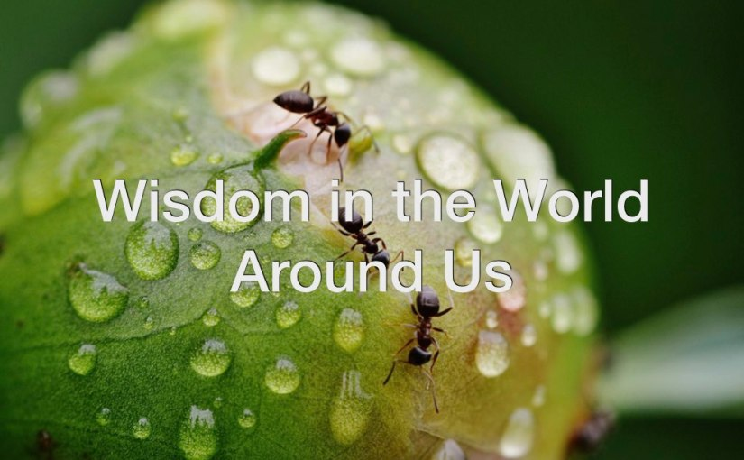 Wisdom in the World Around Us – Day 147 of 365 Days to a BetterYou