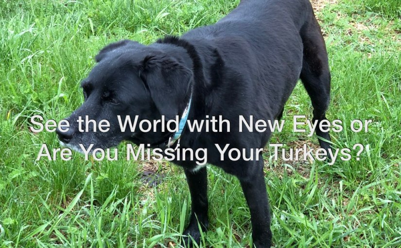 See with New Eyes or Are You Missing Your Turkeys? – Day 163 of 365 Days to a Better You