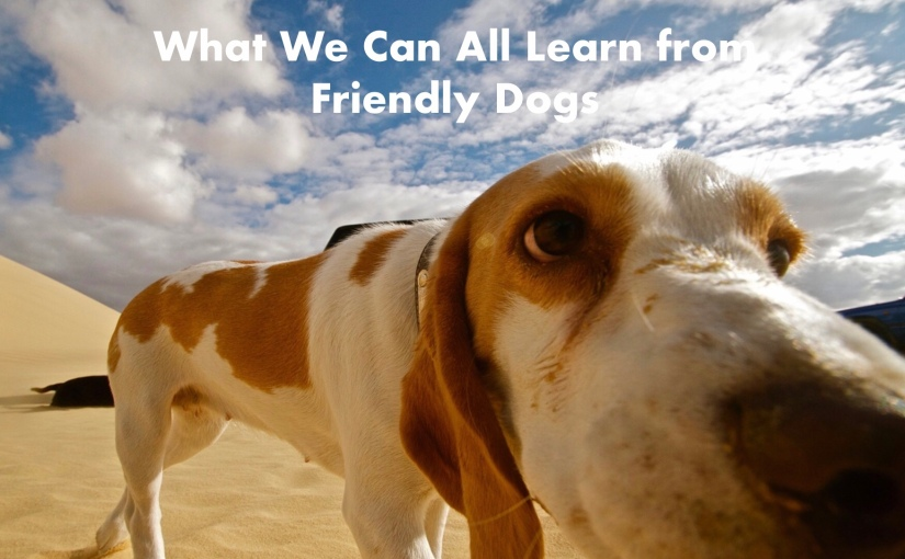 10 Things We Should All Be Learning from Friendly Dogs – Day 188 of 365 Days to a Better You