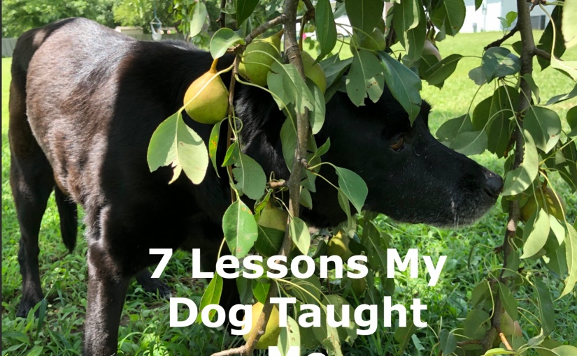 7 Lessons My Dog Taught Me – Day 224 of 365 Days to a Better You