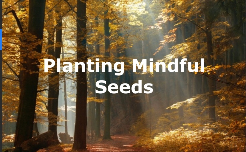 Planting Mindful Seeds – Day 242 of 365 Days to a Better You