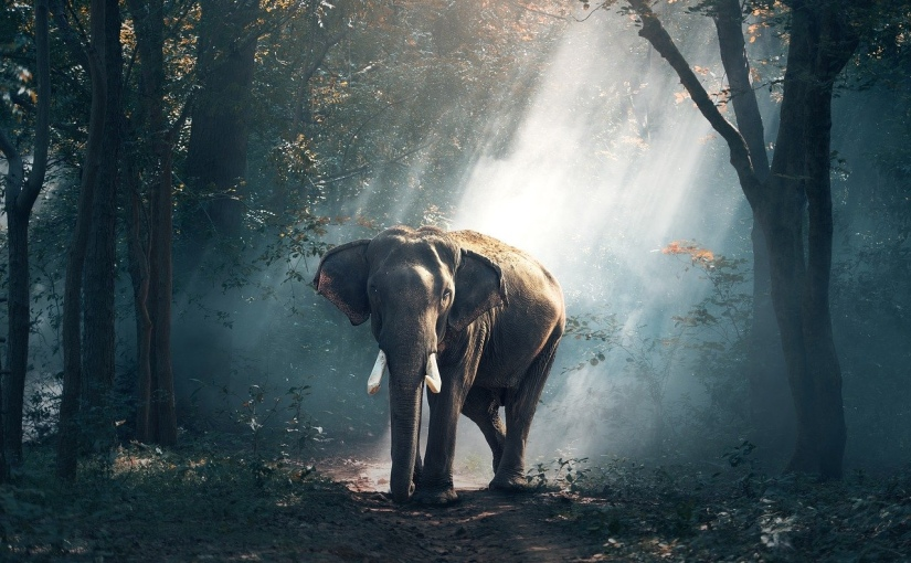 The Parable of the Man and the Elephant