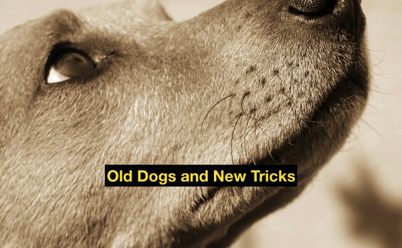 Old Dog, New Tricks – Day 339 of 365 Days to a Better You